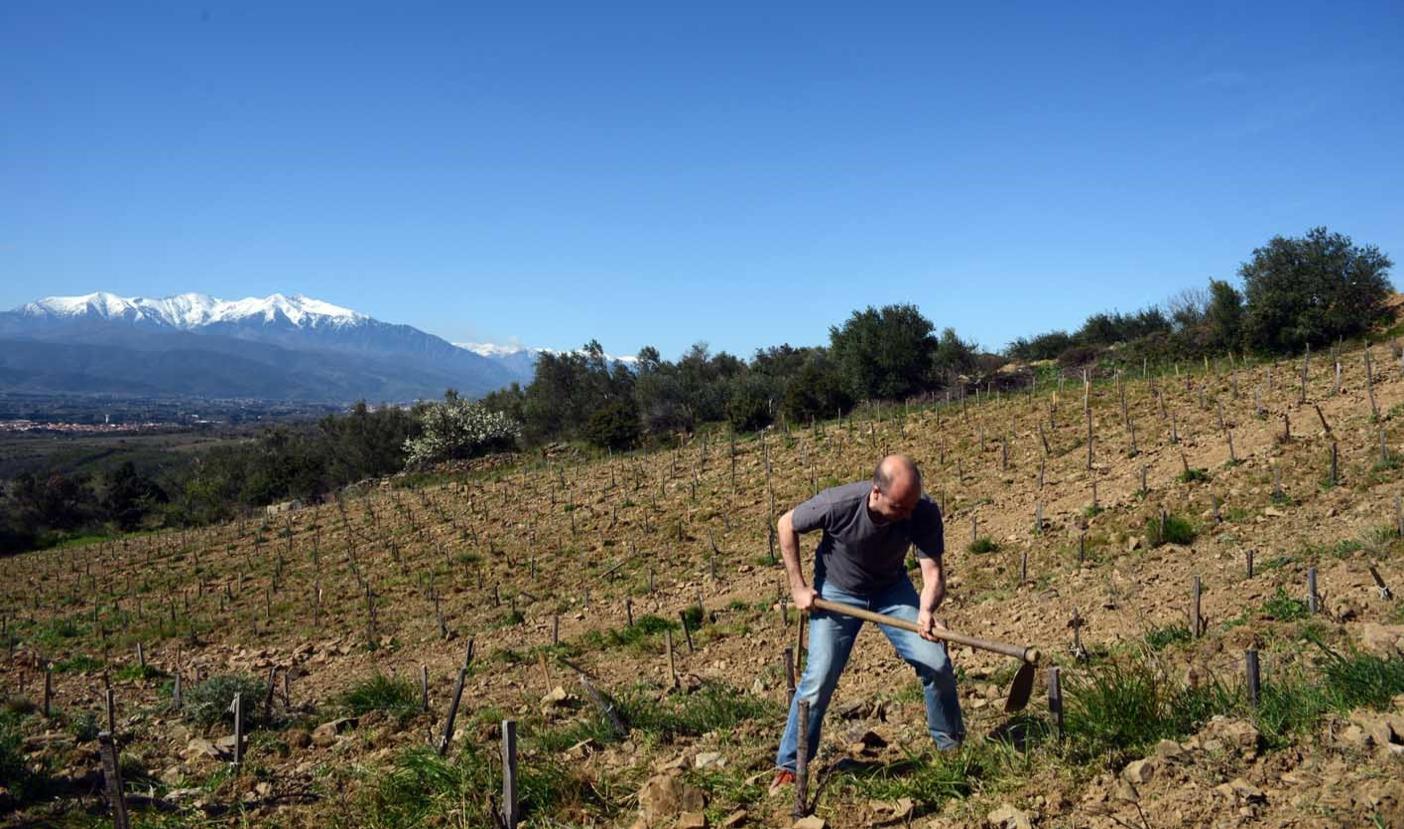 Jean Boucabeille, Vigneron au Domaine Boucabeille en Languedoc Roussillon